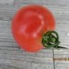 トマト最初の一個を収穫!