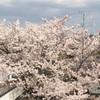ひさーしぶりのひとり時間。そして借景、桜が綺麗です!