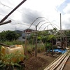 ピオーネ屋根 60%完成  60% of the roof with a plastic sheet for Pione were completed.