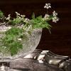 チャービルの白い花