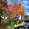 紅葉間近、イチョウの大木を見に福井県小浜市へツーリング