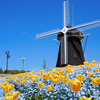 【大阪】オランダみたいな春の絶景 鶴見緑地