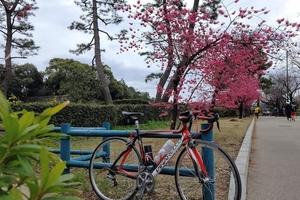 【行ったつもりシリーズ】23区内の観梅スポットをサイクリング(前編)