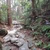 ジャングルモックを履いて東海道五十三次ひとり歩き 4日目