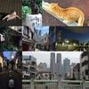 【西新宿五丁目・四丁目散歩】神田川沿いや路地裏、都庁とレトロな街並みを歩いて楽しむ