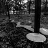 森の中の遊具(木場公園)
