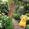横浜イングリッシュガーデンの春バラたちと【ポケモンGOAR写真】