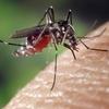 どれが一番効く?蚊に刺されたかゆみを一発で止める方法3種比較!