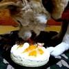 お嬢…生誕14周年