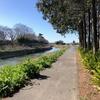 元荒川を歩く その4 久喜・旧菖蒲町大御堂橋から武蔵水路元荒川伏越