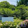 長法寺【津山市】梅雨の晴れ間にみた紫陽花と多宝塔から観る津山の町並みが美しい。