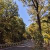 【週末散策】森林浴と温泉でリフレッシュ【多摩湖自転車歩行者道とかたくりの湯】
