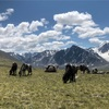 モンゴル旅行2(バヤンウルギー)(аялалын тухай 2)