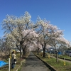 「高畠桜の名所を巡るサイクリングツアー」に参加した話