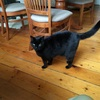 ダニーデンの猫のいるホテル「ハルムスコートB&B」が最高|ニュージーランド夫婦旅