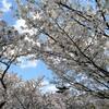 2019/04/15 今日一番「仁和寺」