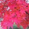 紅葉と桜花2
