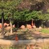 天王寺動物園とワインフェスへ!