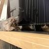 猫暮らし初めての大きな地震で考える