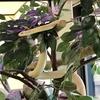 山口県 岩国 日本歴史公園百選「吉香公園」大噴水、武家屋敷、「シロヘビの館」、鵜の里、ポケモンGOの聖地「吉香神社」