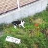 箱入り猫と、そとの猫。