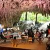 亜熱帯の森 沖縄県 「ガンガラーの谷」 約1万8000年前「港川人」居住区、予約 CAVE CAFE(サキタリ洞遺跡)