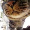 福岡-猫がたくさん住んでいる猫島の「藍島」に行ったワン!