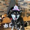 ホロホロ山荘に一泊旅行!2日目は12歳の誕生日!【2020年8月23日】