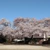 中村倫也company〜「桜🌸・・」