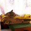 猫と言えば段ボール箱なのでいっそのこと猫ベッドにしてみた ~アボカドとトマトの箱がお勧めです~