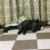 キターッ!甲斐犬愛護会関西支部鑑賞会のお知らせ( ˊ̱˂˃ˋ̱ )❤︎