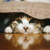 猫屋敷のお話