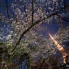 2019年 都内で一晩歩き回って撮った桜写真達 ~その3~