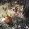猫とユリと毒草と
