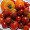 夏休みの栽培体験!「ミニトマト栽培」 【育てる・収穫・食べる】喜び