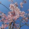 京焼のなかの粟田(粟田口)焼(2) 春二題付