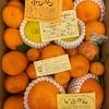 【ふるさと納税】佐賀県太良町より柑橘詰め合わせが届きました