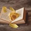 N予備校の英語の授業〜英文法の知識を読解に役立てる方法が学べる〜