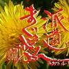 第252話【派遣まぐ愛】新しい愛の形象カタチ