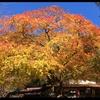 大阪府民に愛される山・金剛山でお気軽ハイキング