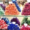 免税の島ランカウイでおすすめのお土産屋さん♪人気のチョコレート、なまこ、服、コスメなど