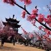 No:083【兵庫県】一足早い春の訪れを満喫!「世界の梅公園」は300種類の梅が咲き誇る!!