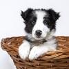 初めて犬を飼い始めた人に伝えたい!私が後悔してる一つの事