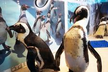 水族館じゃなくてもホンモノのペンギンに会える!?「ペンギンのいるBAR」に行ってきた