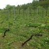 『ワイン体験レポート2年目』6月