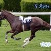 「京都牝馬S」2019年☆予想!!