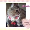 猫ちゃんのお写真紹介.第11弾