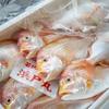 2019年4月8日 小浜漁港 お魚情報