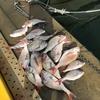 鯛を釣りに海へ