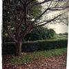 夏の終わりと秋の風…散るも華麗な木の葉色~ふづきの独り言~